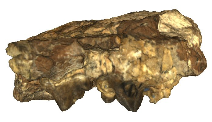 Partial maxilla with P3 and P4